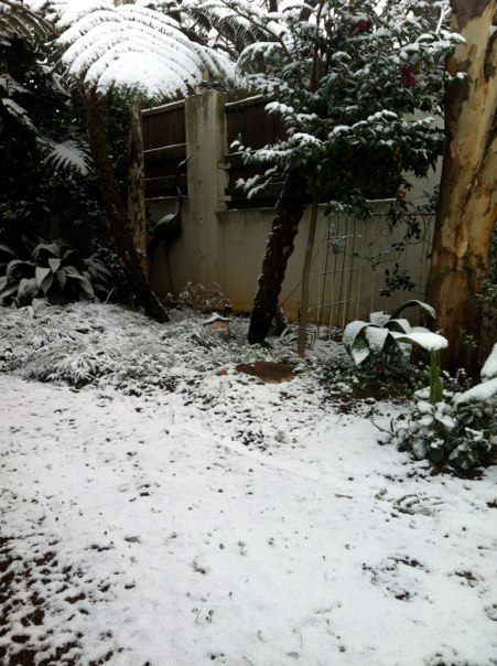 Joburg streets filled with snow and grown-up kids – project me post 868